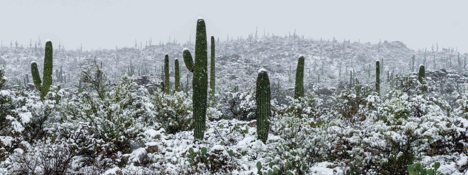 episode art - desert snow, for Luchadora